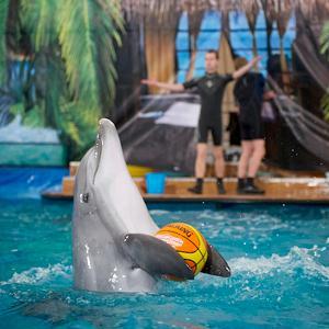 Дельфинарии, океанариумы Шексны