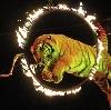 Цирки в Шексне