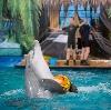 Дельфинарии, океанариумы в Шексне