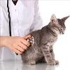 Ветеринарные клиники в Шексне